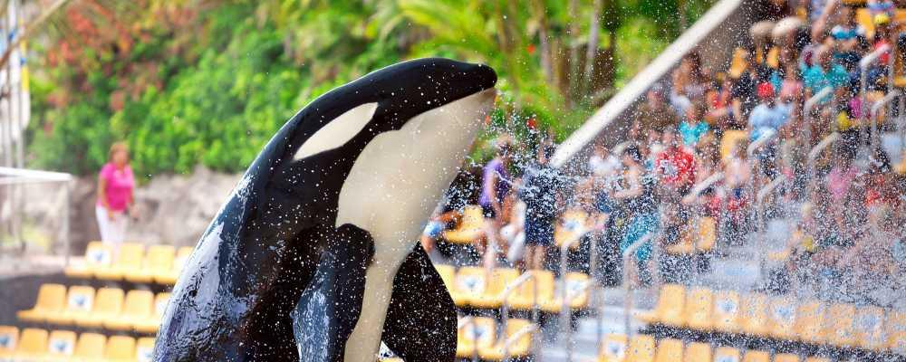 Loro Parque – Valóban több, mint csupán állatkert – szubjektív élménybeszámoló