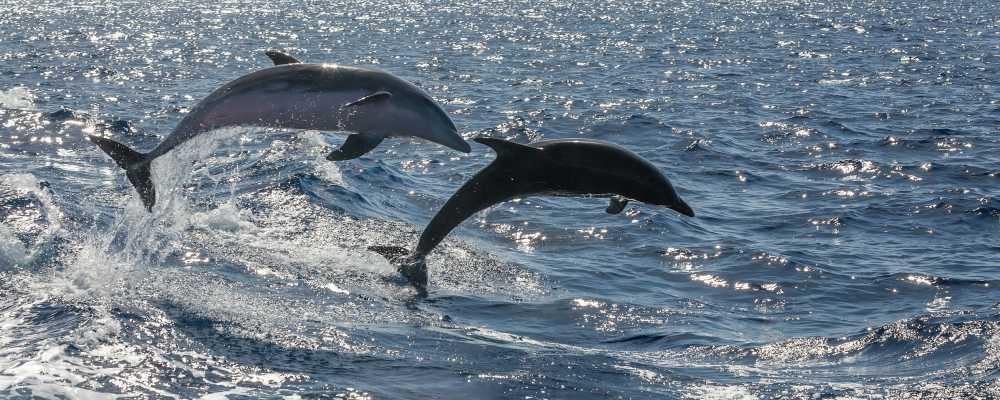 Delfinlesen Tenerifén – elfogult helyzetjelentés egy kalózhajóról!